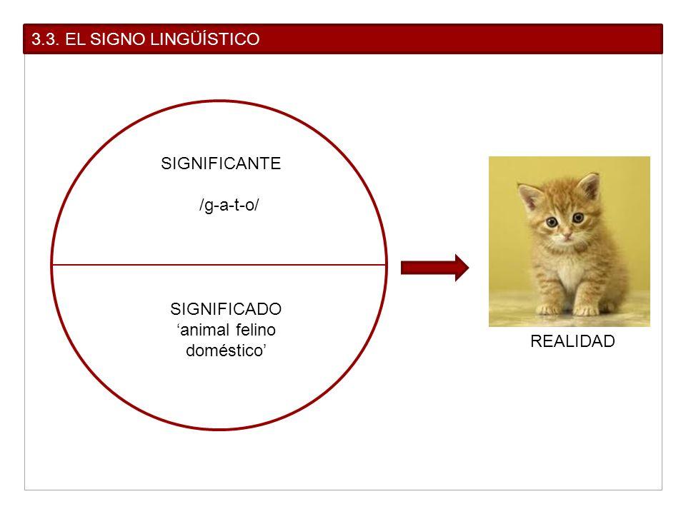 'animal felino doméstico'
