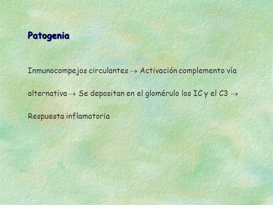 PatogeniaInmunocompejos circulantes  Activación complemento vía alternativa  Se depositan en el glomérulo los IC y el C3  Respuesta inflamatoria.