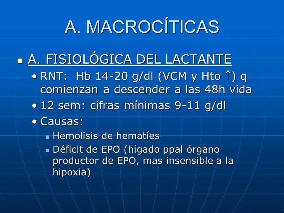 A. MACROCÍTICAS A. FISIOLÓGICA DEL LACTANTE