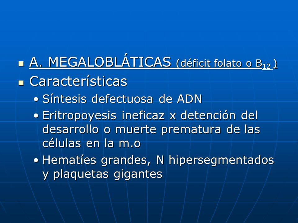 A. MEGALOBLÁTICAS (déficit folato o B12 ) Características
