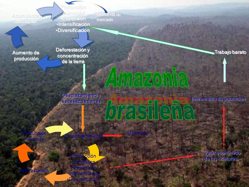 Amazonia brasileña Trabajo barato Desplazamiento y escasez de tierras
