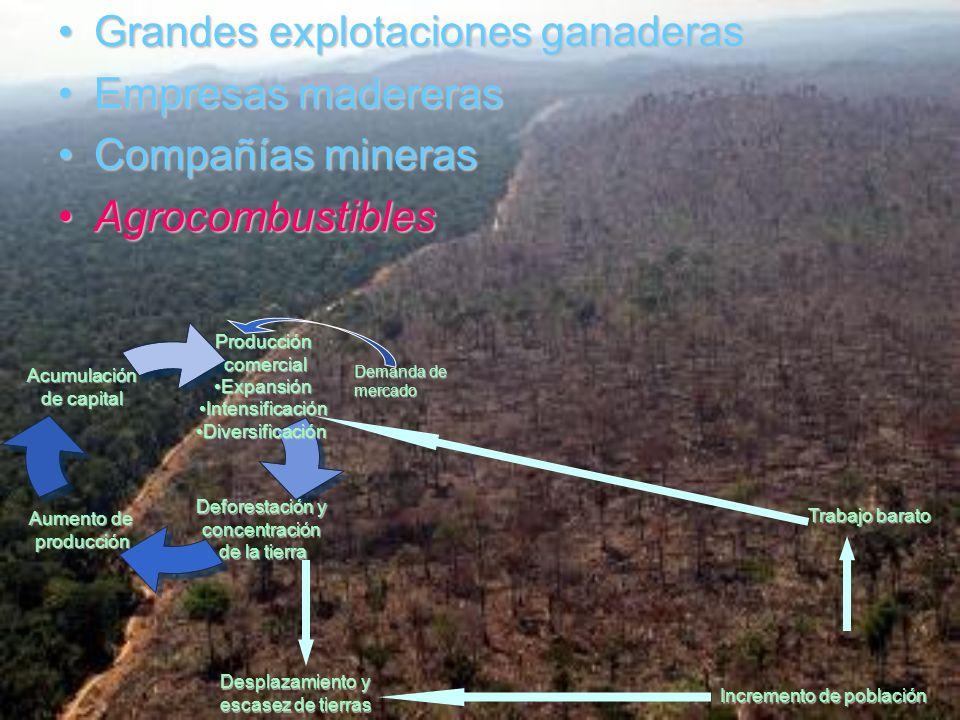 Grandes explotaciones ganaderas Empresas madereras Compañías mineras