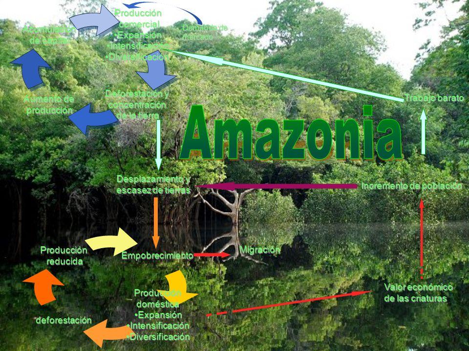 Amazonia Trabajo barato Desplazamiento y escasez de tierras