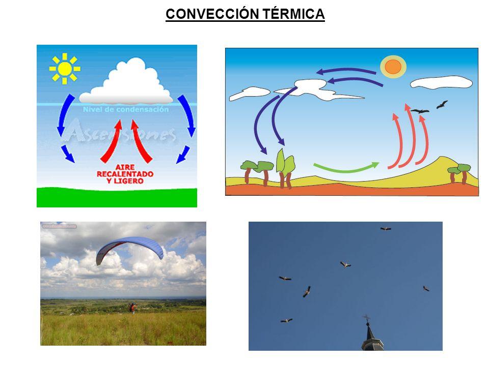 CONVECCIÓN TÉRMICA