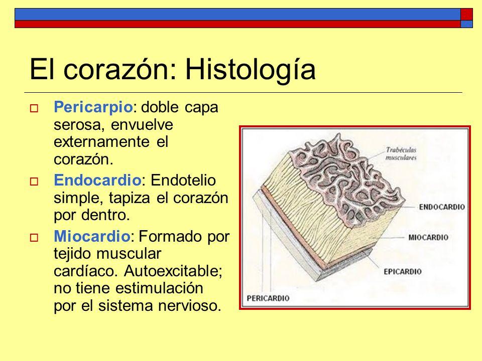 El corazón: Histología