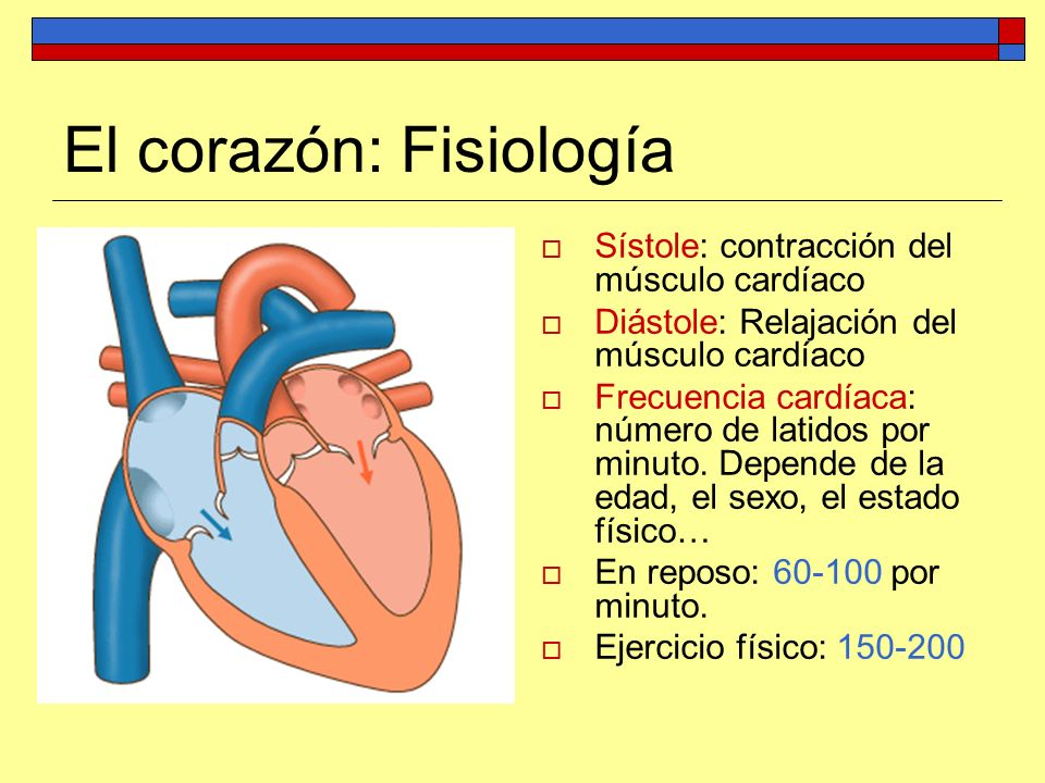 El corazón: Fisiología