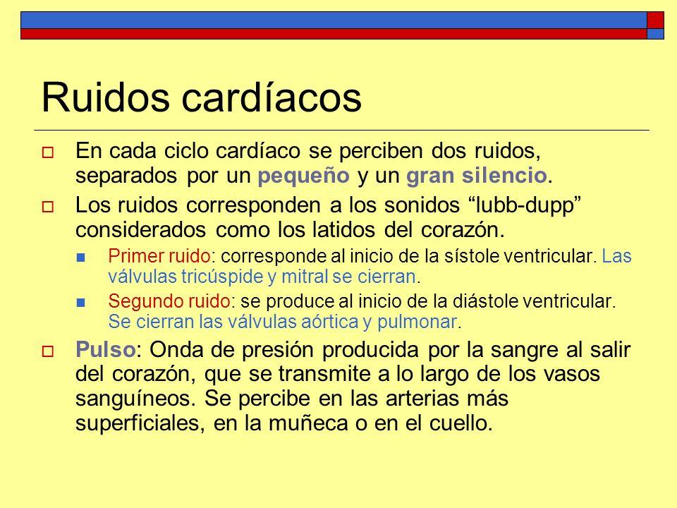 Ruidos cardíacos En cada ciclo cardíaco se perciben dos ruidos, separados por un pequeño y un gran silencio.
