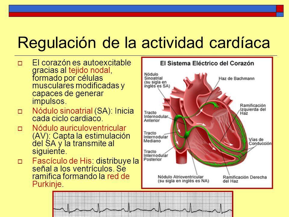 Regulación de la actividad cardíaca