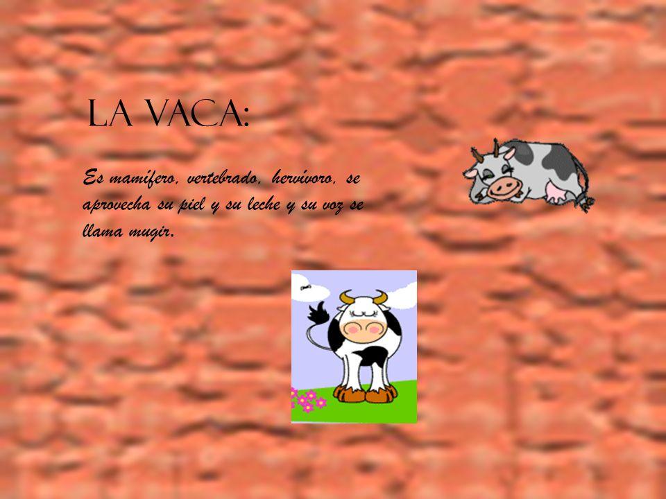 LA VACA: Es mamífero, vertebrado, hervívoro, se aprovecha su piel y su leche y su voz se llama mugir.