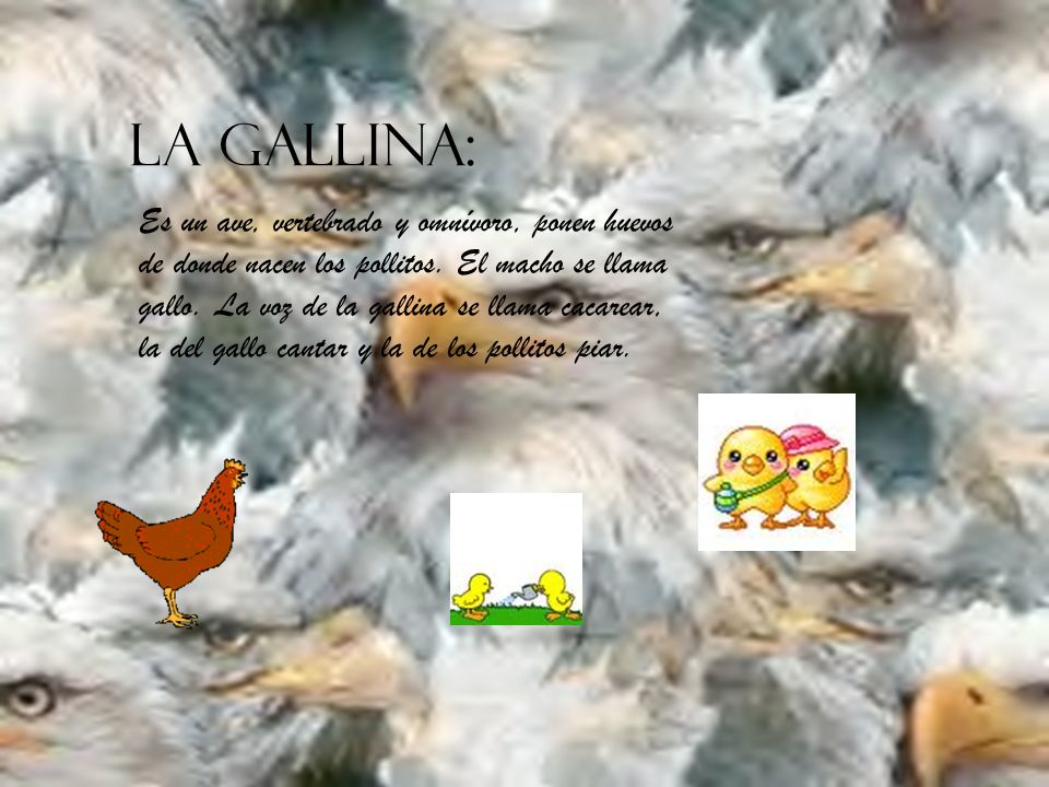 LA GALLINA: