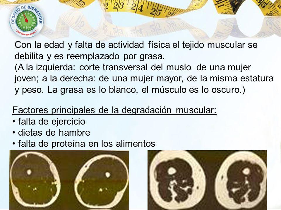 Factores principales de la degradación muscular: falta de ejercicio