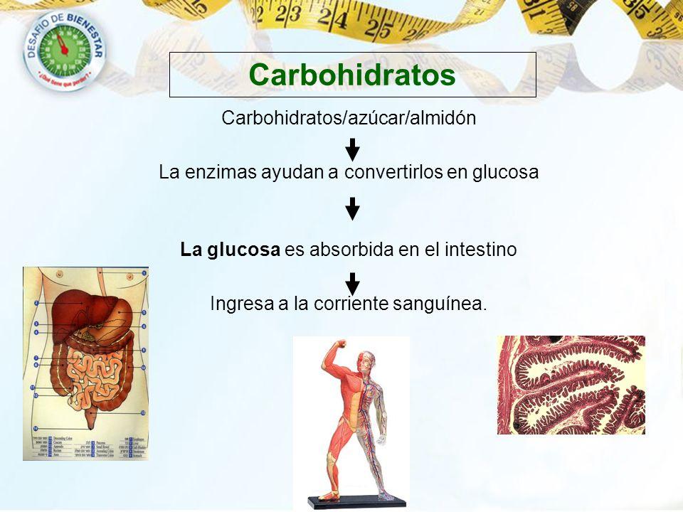 Carbohidratos Carbohidratos/azúcar/almidón