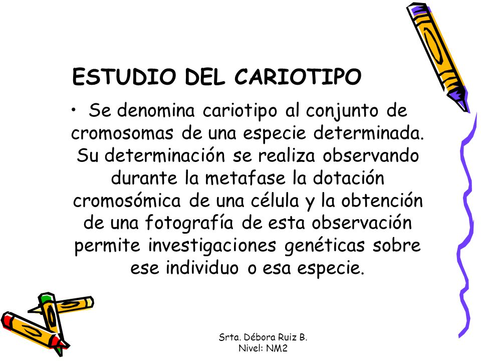 Srta. Débora Ruiz B. Nivel: NM2