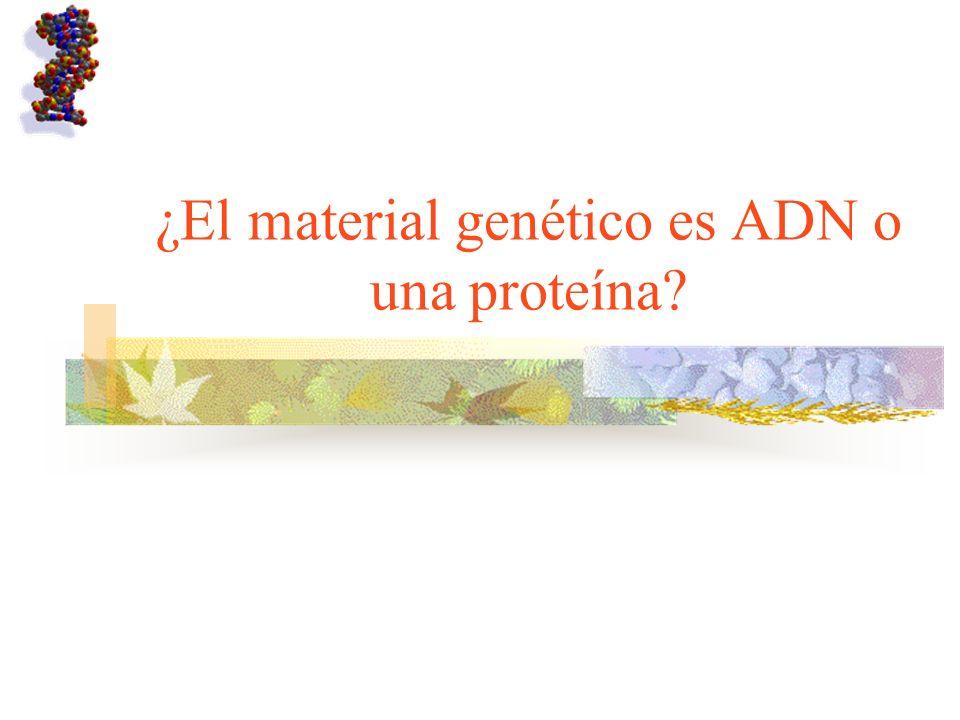 ¿El material genético es ADN o una proteína
