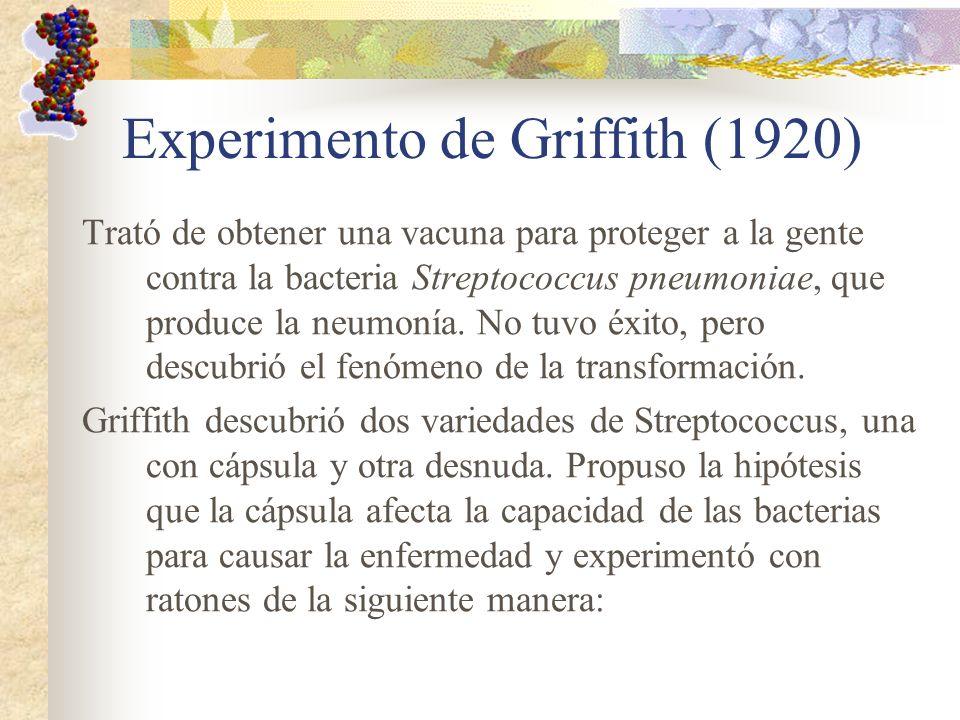 Experimento de Griffith (1920)