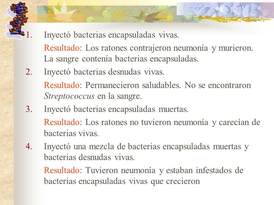 Inyectó bacterias encapsuladas vivas.