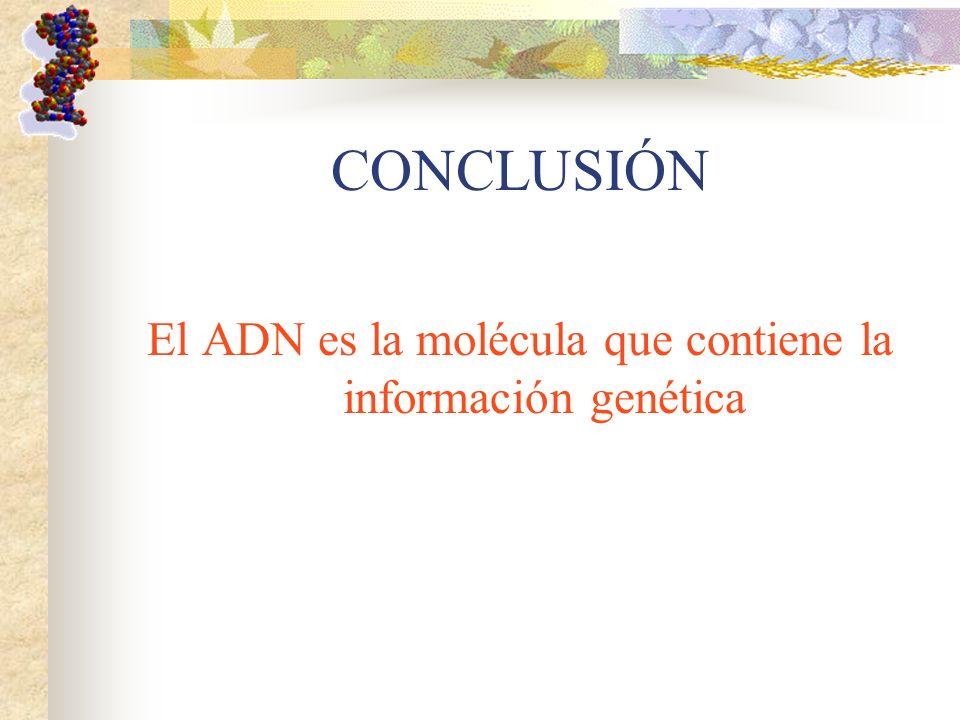 El ADN es la molécula que contiene la información genética