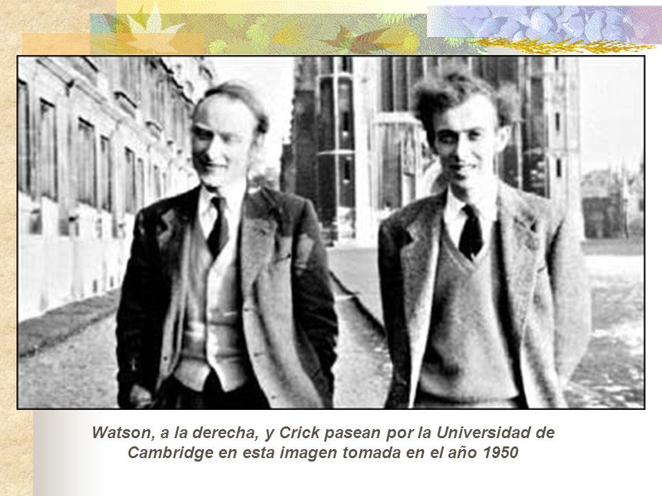 Watson, a la derecha, y Crick pasean por la Universidad de Cambridge en esta imagen tomada en el año 1950