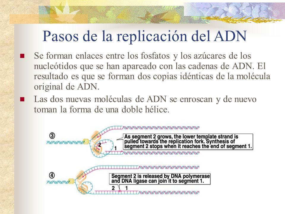Pasos de la replicación del ADN