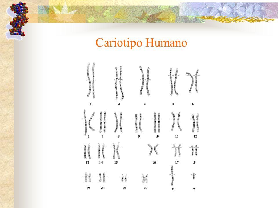 Cariotipo Humano