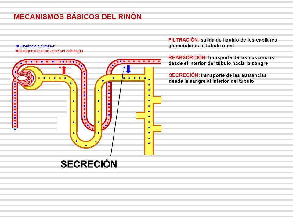 SECRECIÓN MECANISMOS BÁSICOS DEL RIÑÓN