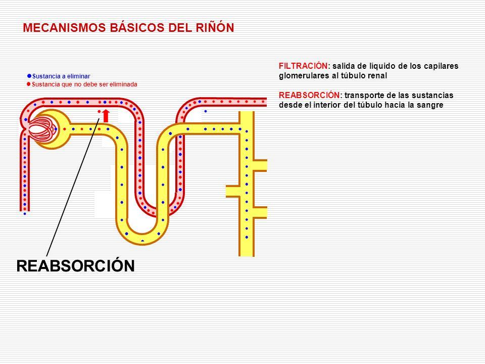 REABSORCIÓN MECANISMOS BÁSICOS DEL RIÑÓN
