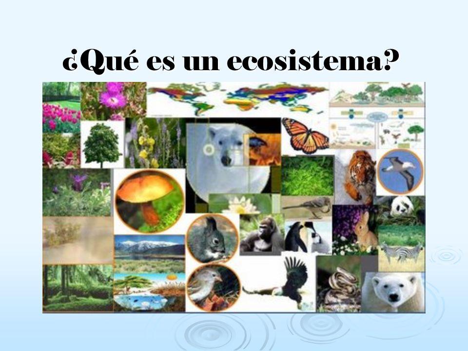 ¿Qué es un ecosistema
