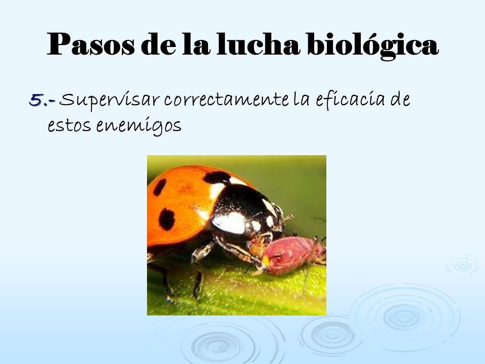 Pasos de la lucha biológica