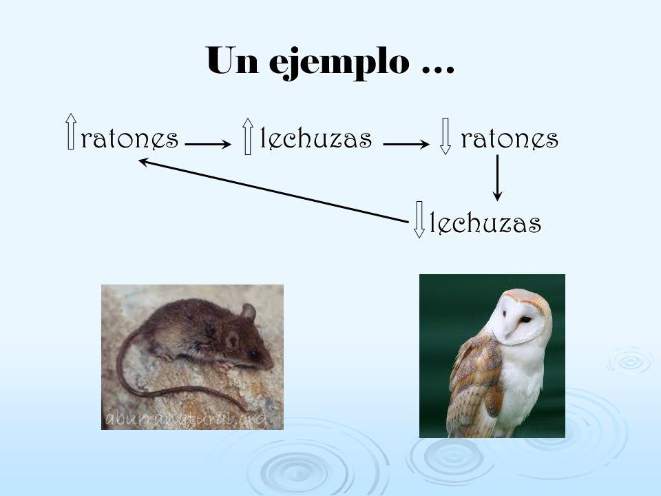 Un ejemplo … ratones lechuzas ratones lechuzas
