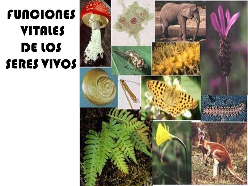 FUNCIONES VITALES DE LOS SERES VIVOS