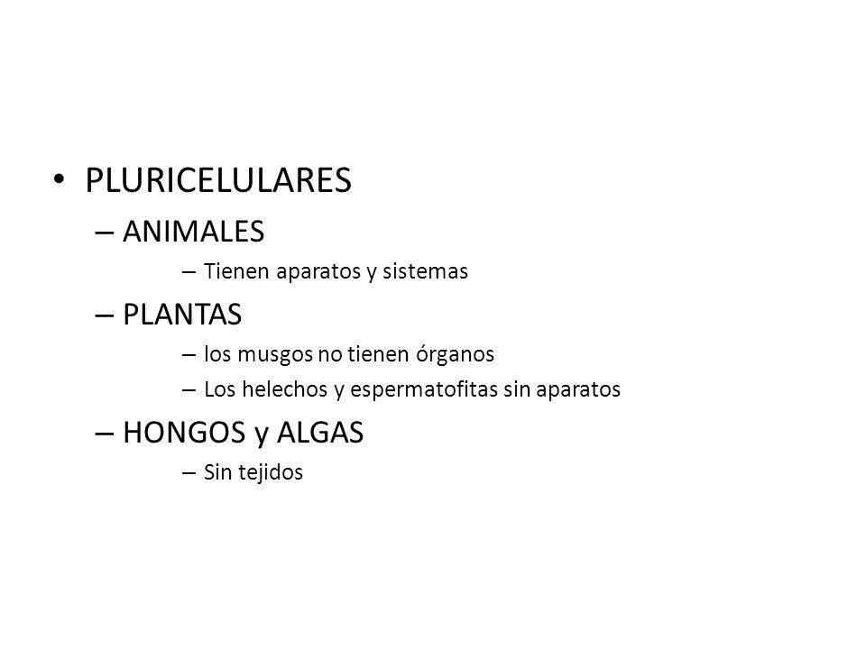 PLURICELULARES ANIMALES PLANTAS HONGOS y ALGAS