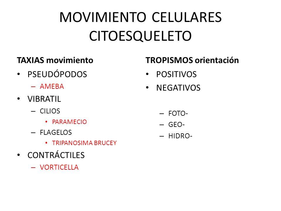 MOVIMIENTO CELULARES CITOESQUELETO