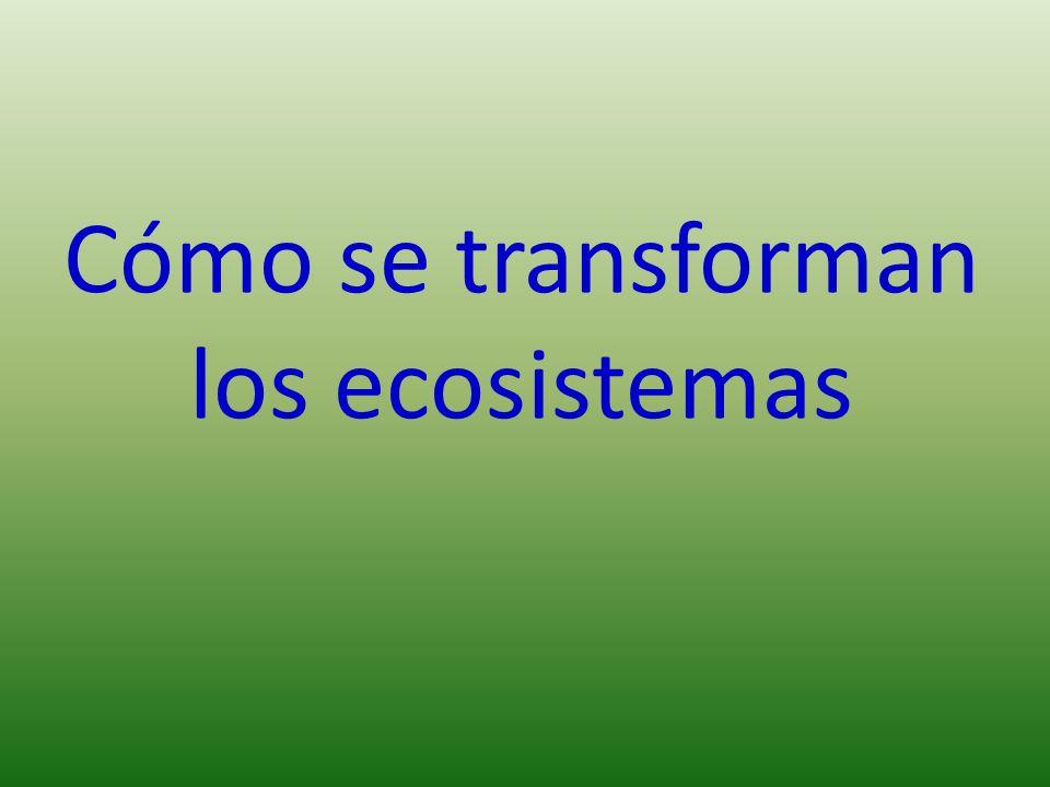 Cómo se transforman los ecosistemas