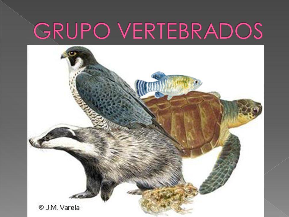 GRUPO VERTEBRADOS