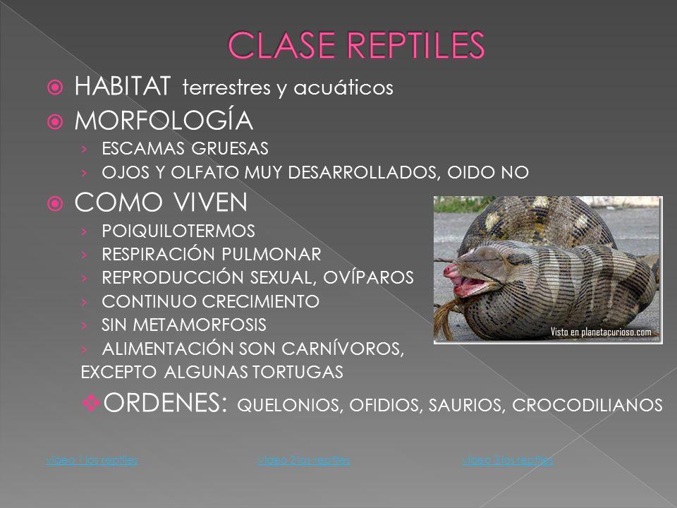 CLASE REPTILES HABITAT terrestres y acuáticos MORFOLOGÍA COMO VIVEN