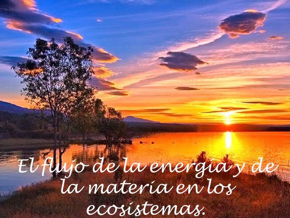 El flujo de la energía y de la materia en los ecosistemas.