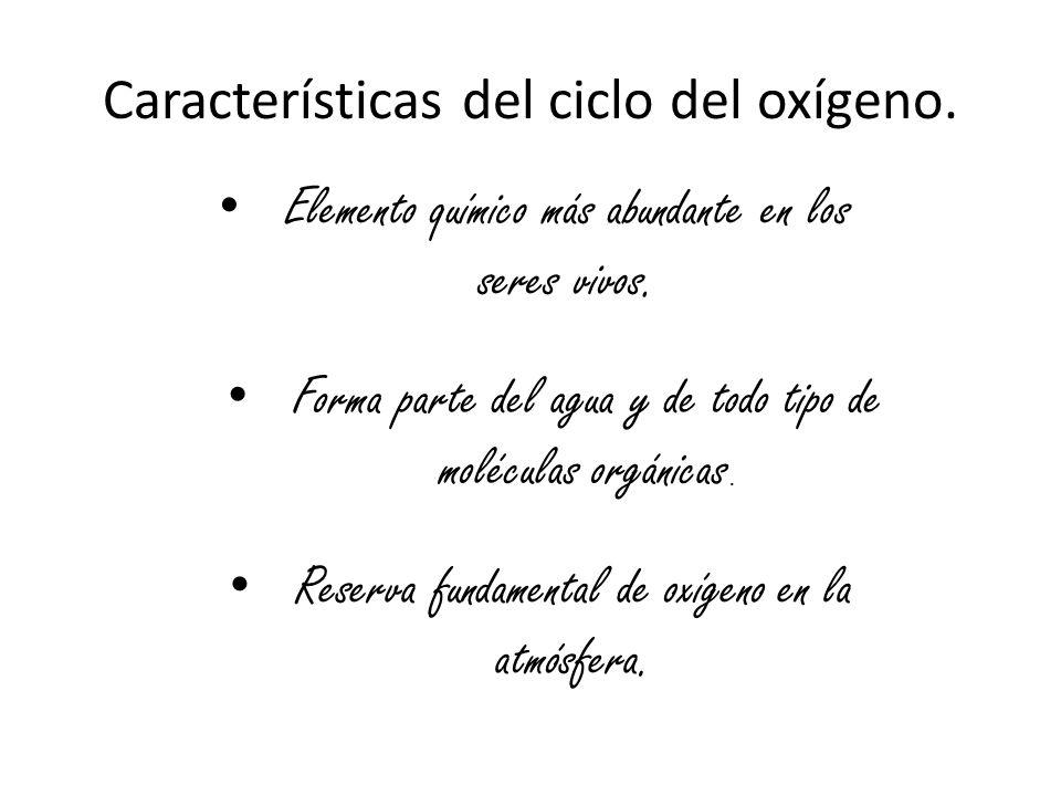 Características del ciclo del oxígeno.