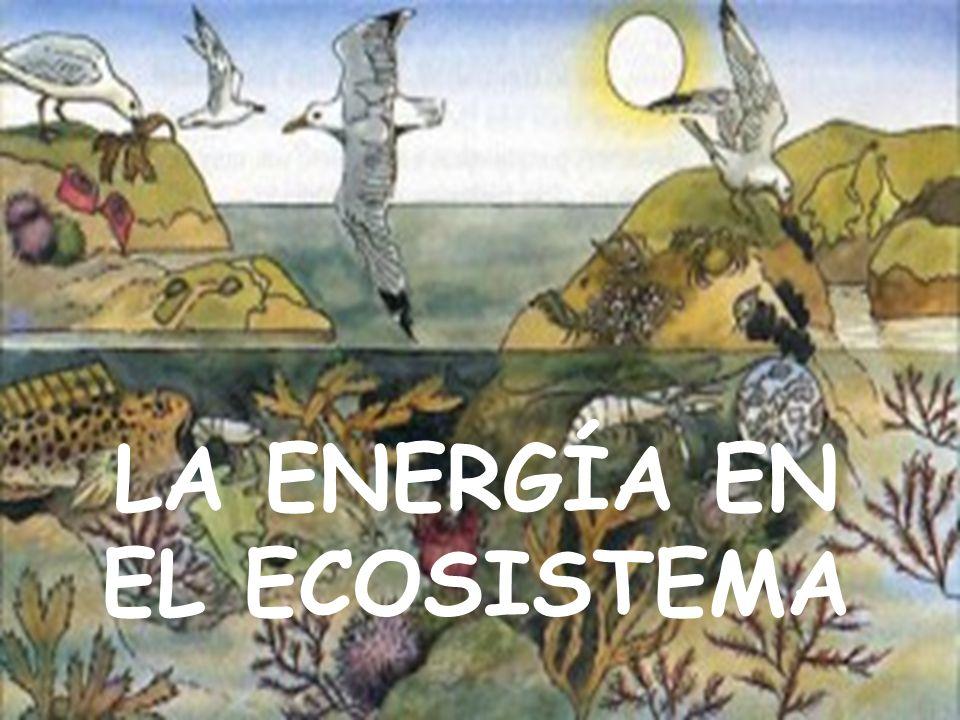 LA ENERGÍA EN EL ECOSISTEMA
