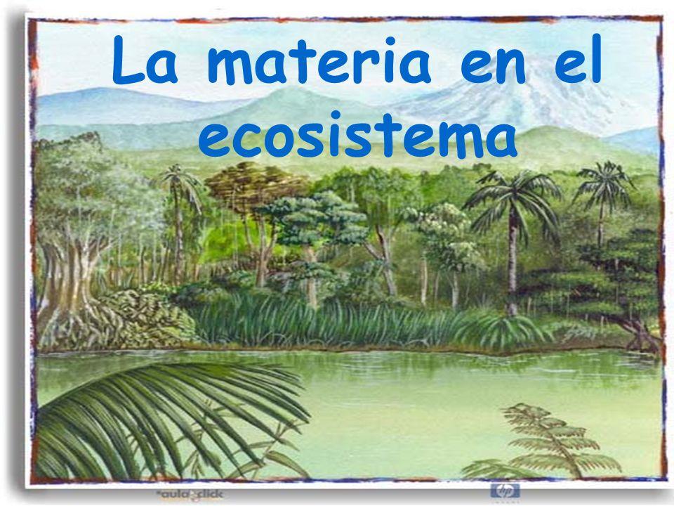 La materia en el ecosistema