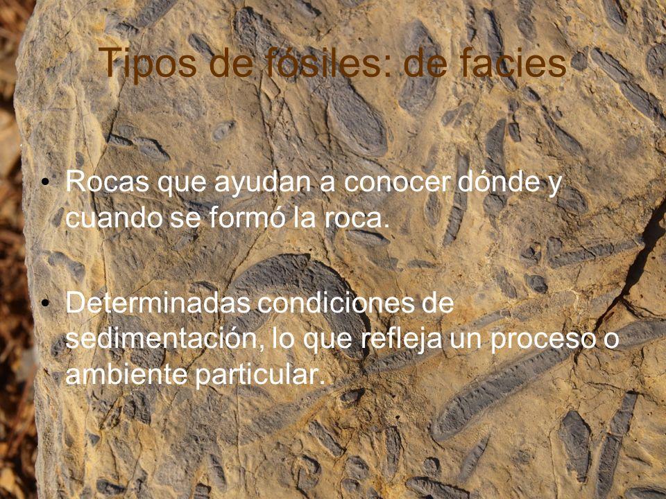 Tipos de fósiles: de facies