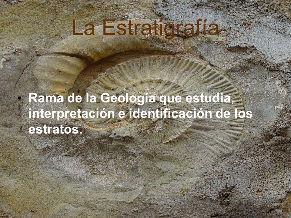 La Estratigrafía Rama de la Geología que estudia, interpretación e identificación de los estratos.