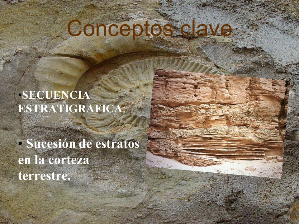 Conceptos clave Sucesión de estratos en la corteza terrestre.