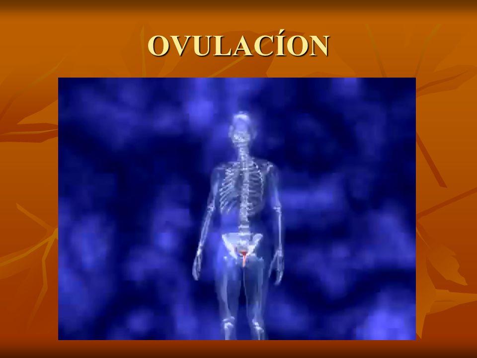 OVULACÍON