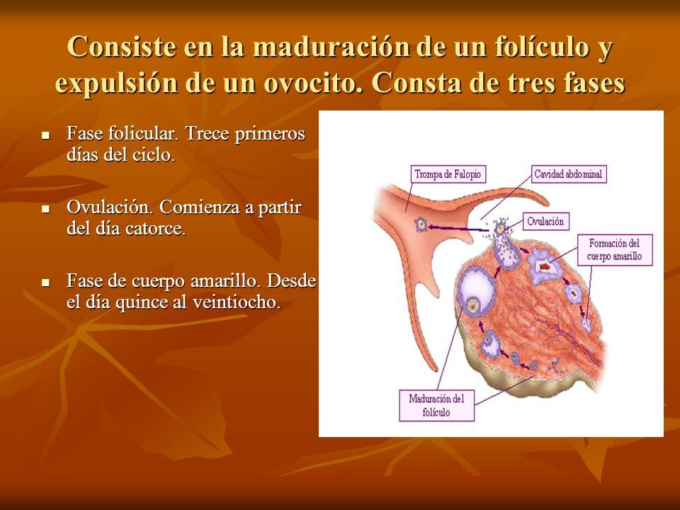 Consiste en la maduración de un folículo y expulsión de un ovocito