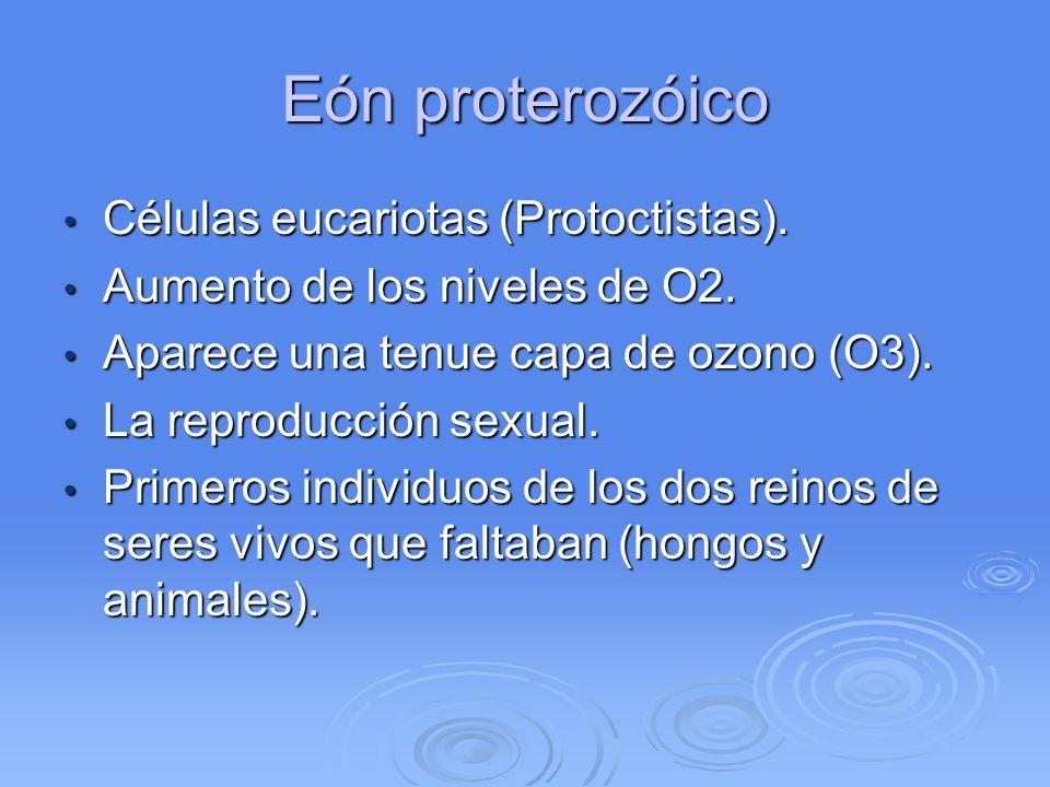 Eón proterozóico Células eucariotas (Protoctistas).