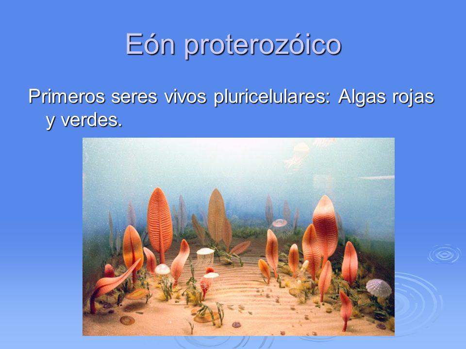 Eón proterozóico Primeros seres vivos pluricelulares: Algas rojas y verdes.