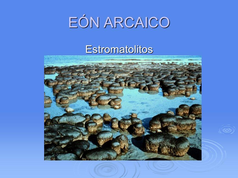 EÓN ARCAICO Estromatolitos