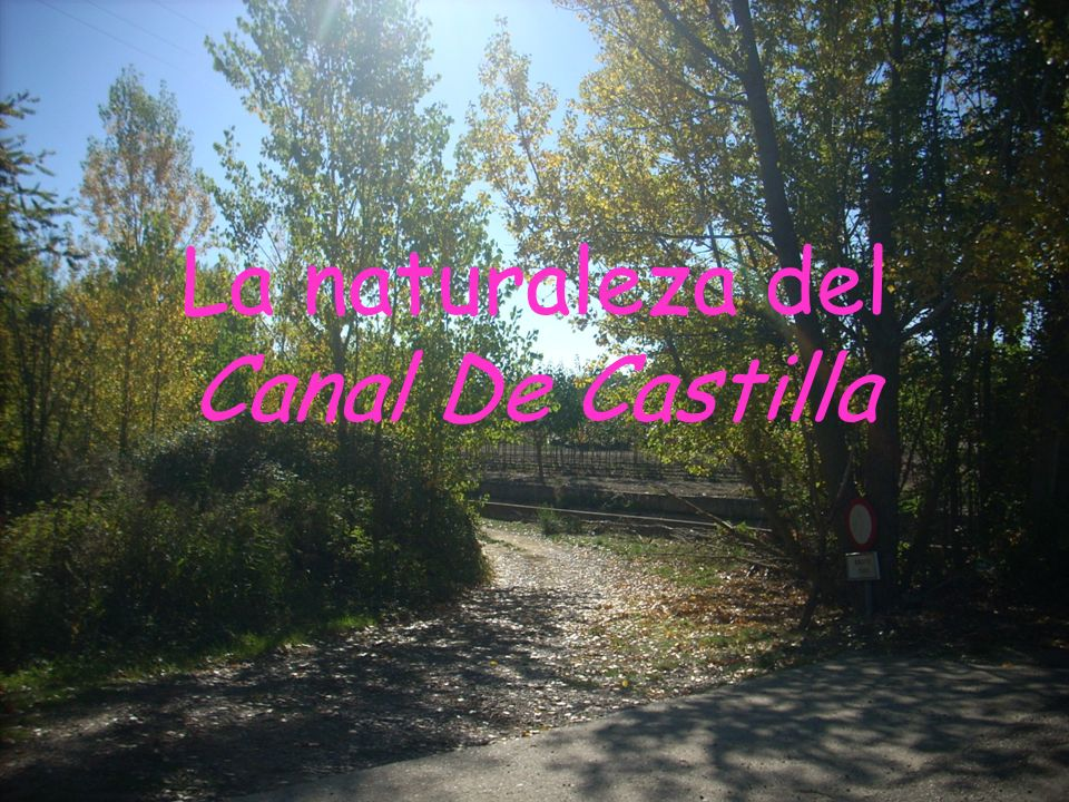 La naturaleza del Canal De Castilla