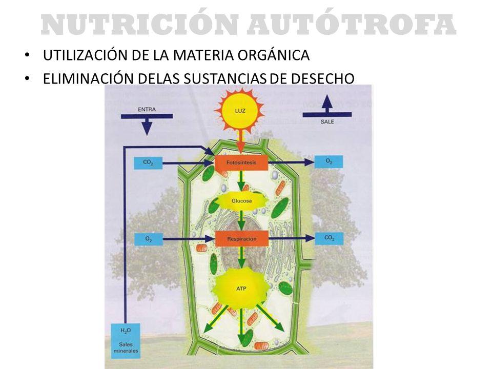 NUTRICIÓN AUTÓTROFA UTILIZACIÓN DE LA MATERIA ORGÁNICA