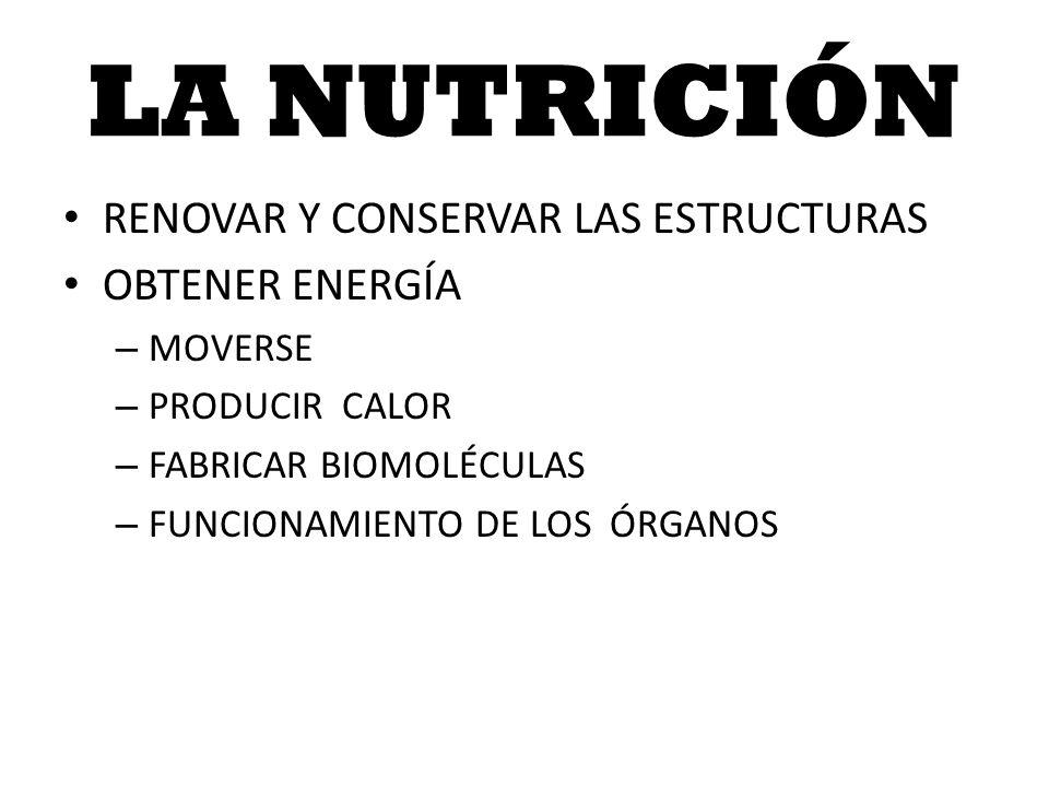 LA NUTRICIÓN RENOVAR Y CONSERVAR LAS ESTRUCTURAS OBTENER ENERGÍA